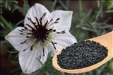 خواص داروییسیاه دانه،سیاه تخمه،شونیز black cumin