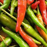 خواص داروییفلفلها pepper