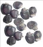 خواص داروییبلادر cashew marking nut