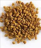 خواص داروییتخم شنبلیله fenugreek seed