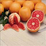خواص داروییگریپ فروت grapefruit