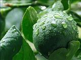 همه چیز درباره دمنوش زنجفیل و لیمو