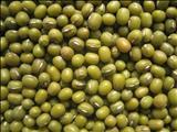 خواص داروییماش سبز green gram