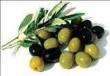 خواص داروییزیتون olive
