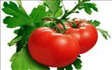 خواص داروییگوجه فرنگی tomato
