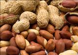 خواص داروییبادام زمینی peanut
