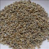 خواص داروییتخم جعفری parsley seed