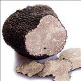 خواص داروییقارچ دنبالان truffle