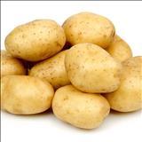 خواص داروییسیب زمینی potato