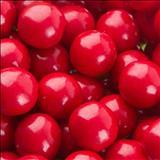 خواص داروییزدو cherry gum