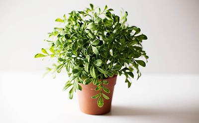۷ گیاهی که به خانهی شما انرژی مثبت میدهد